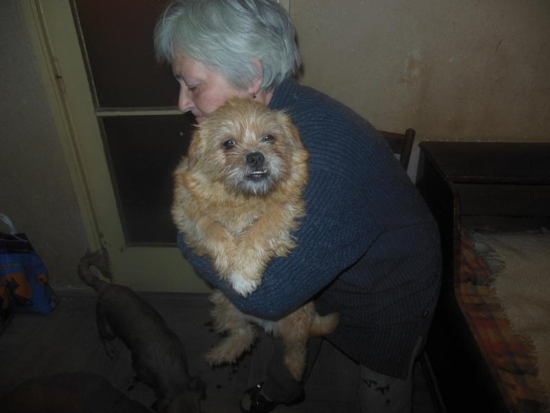 Yvona, née en 2011, petit modèle, chienne super sage Dscn4516