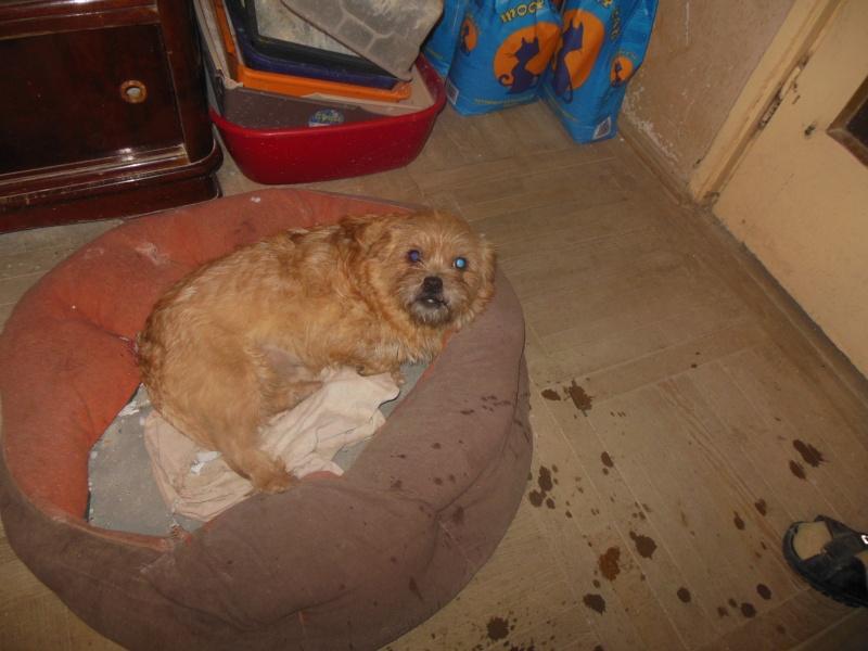 Yvona, née en 2011, petit modèle, chienne super sage Dscn4517