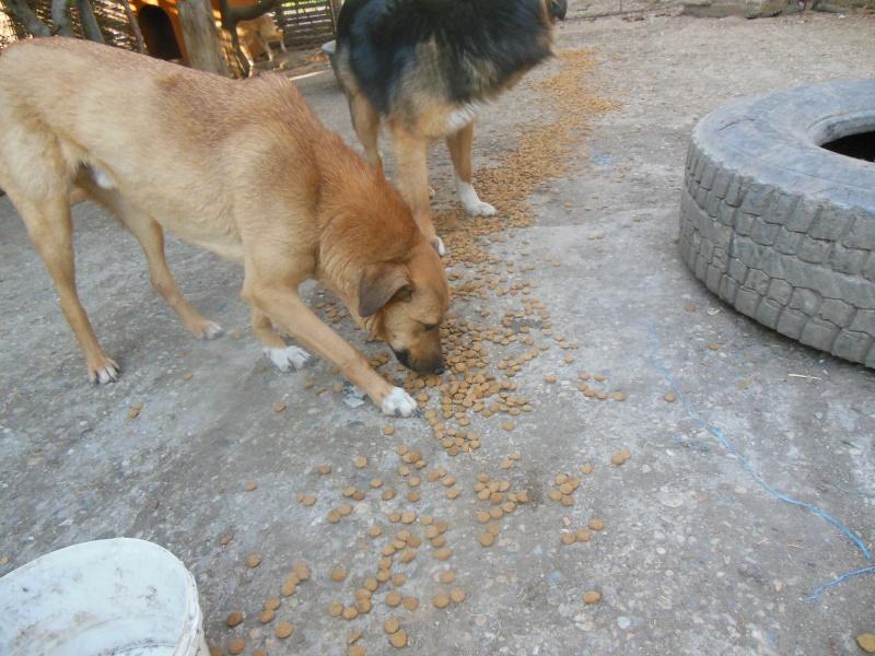 Tzupy, chien de notre quartier, mâle très sociable, né en 2009. Dscn4810