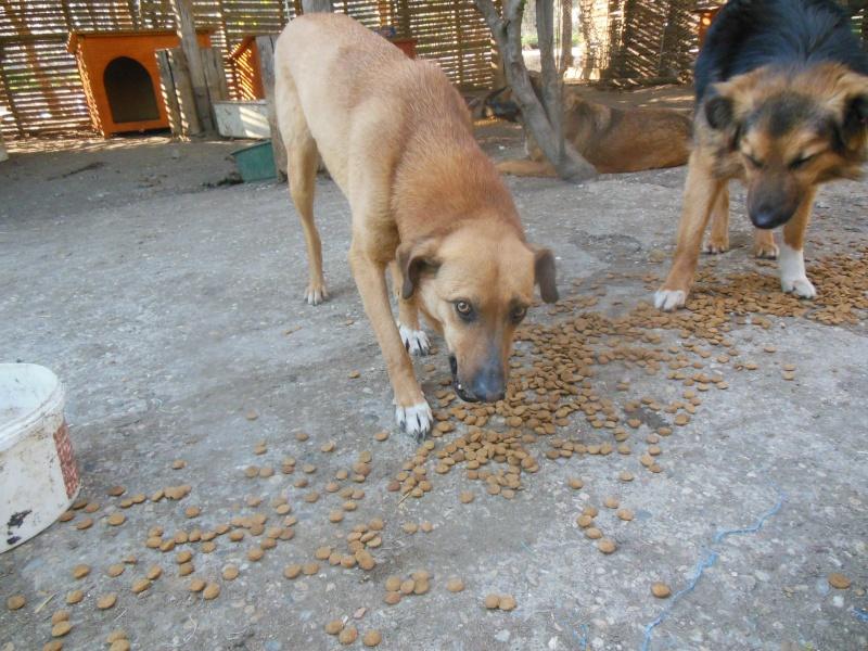 Tzupy, chien de notre quartier, mâle très sociable, né en 2009. Dscn4811