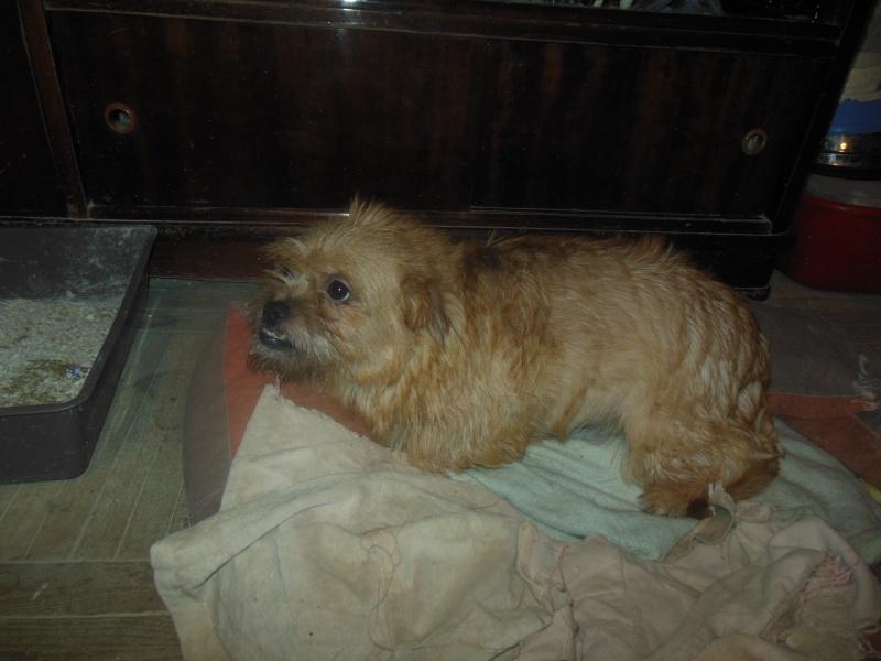 Yvona, née en 2011, petit modèle, chienne super sage Dscn5010