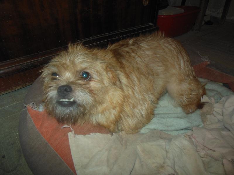 Yvona, née en 2011, petit modèle, chienne super sage Dscn5011