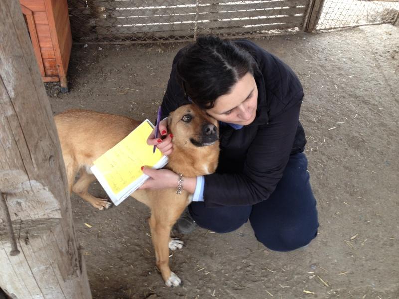 Tzupy, chien de notre quartier, mâle très sociable, né en 2009. Img_6810