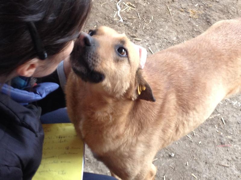Tzupy, chien de notre quartier, mâle très sociable, né en 2009. Img_6811