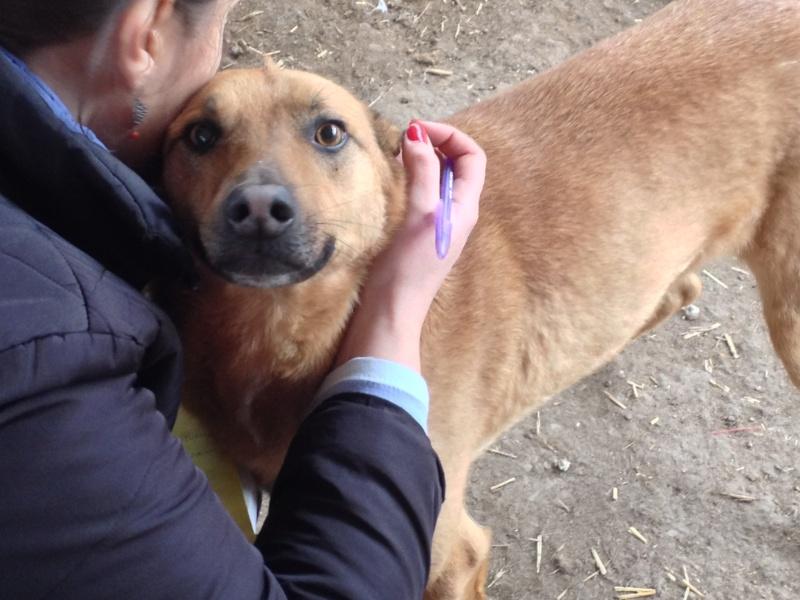 Tzupy, chien de notre quartier, mâle très sociable, né en 2009. Img_6812