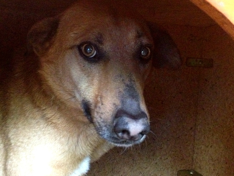 Tzupy, chien de notre quartier, mâle très sociable, né en 2009. Tzupy10