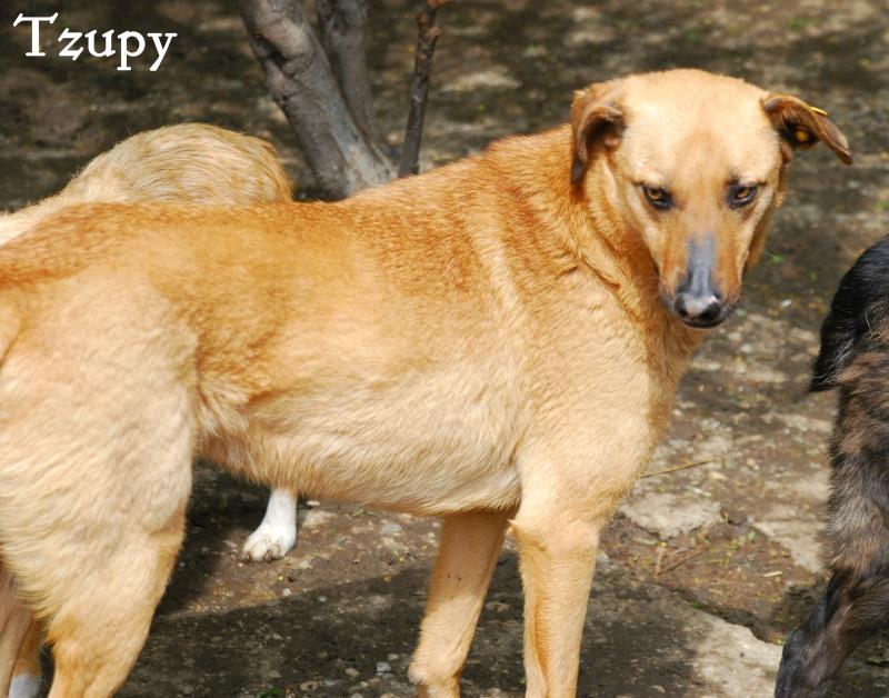 Tzupy, chien de notre quartier, mâle très sociable, né en 2009. Tzupy110