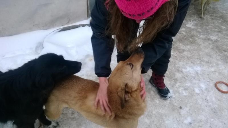 Tzupy, chien de notre quartier, mâle très sociable, né en 2009. Wp_20126
