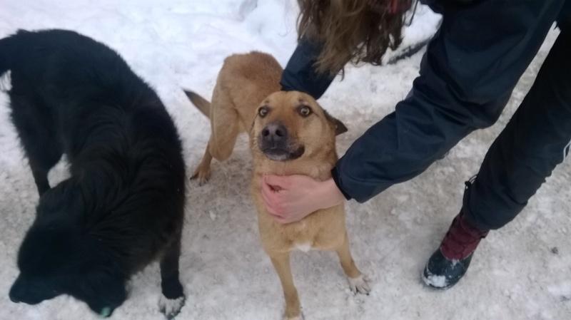Tzupy, chien de notre quartier, mâle très sociable, né en 2009. Wp_20128