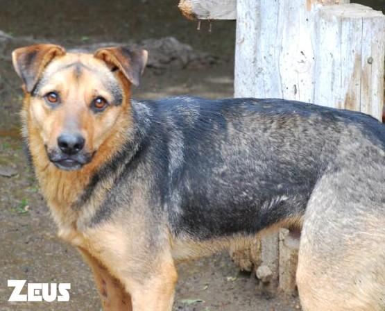 Zeus, né en janvier 2012 Zeus210