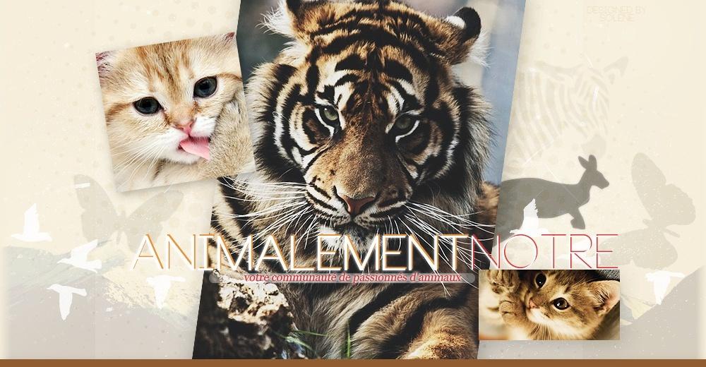 Animalement Notre