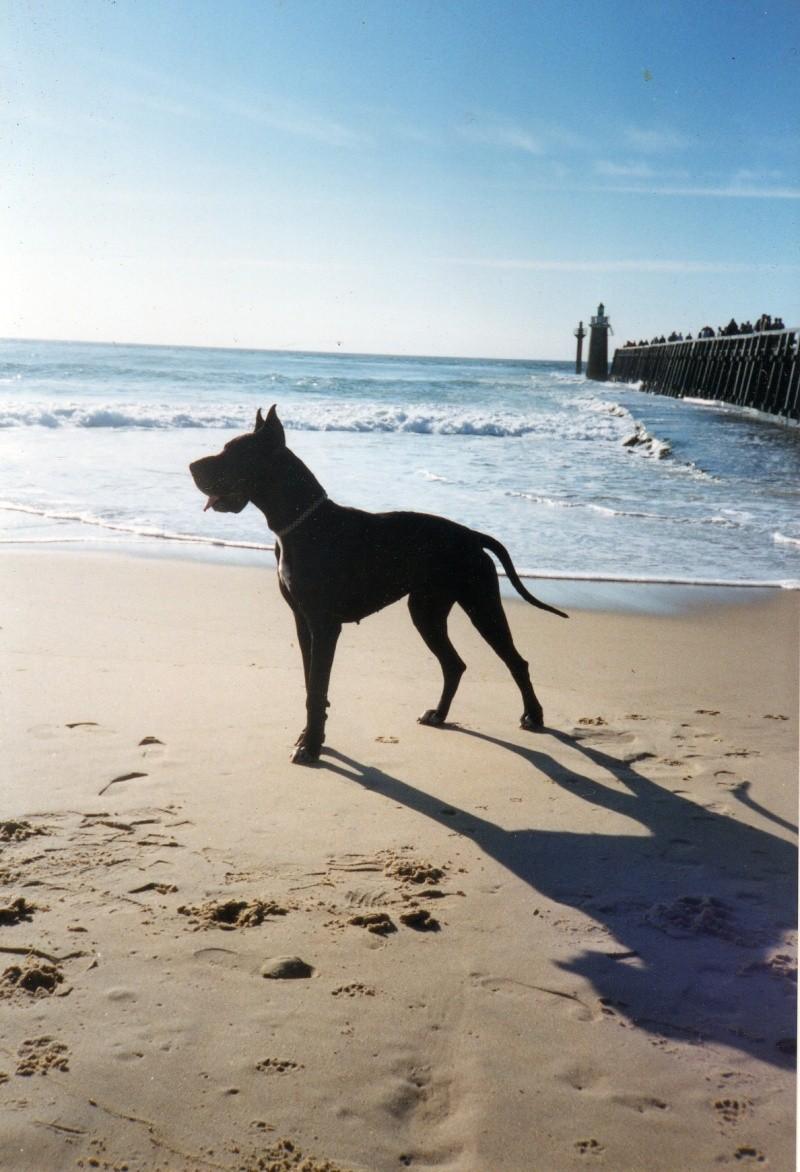 Quelle est votre race de chien préférée? - Page 3 Cles0010