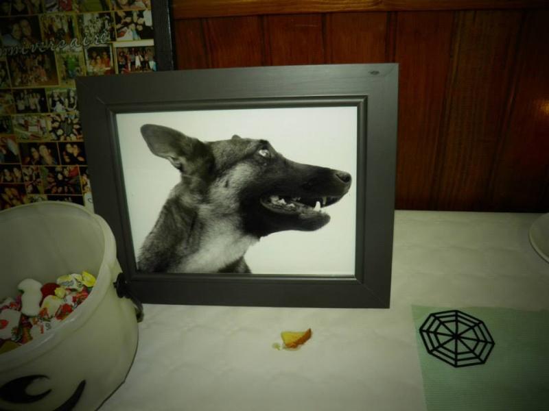 séance photo de ma chienne par un photographe pro, suis-je folle? - Page 4 13918811