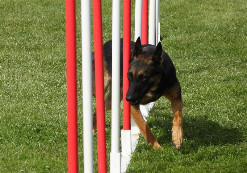 Easy et l'agility Img_6616