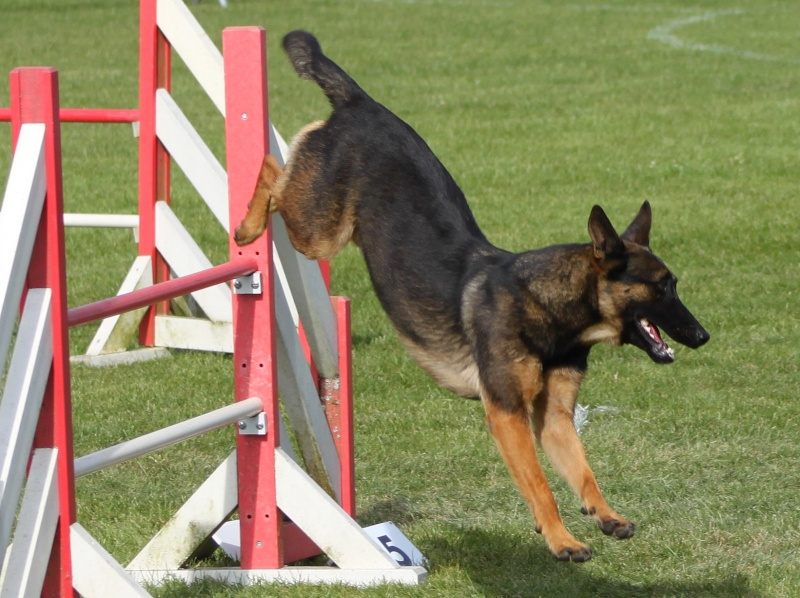 Easy et l'agility Img_6617