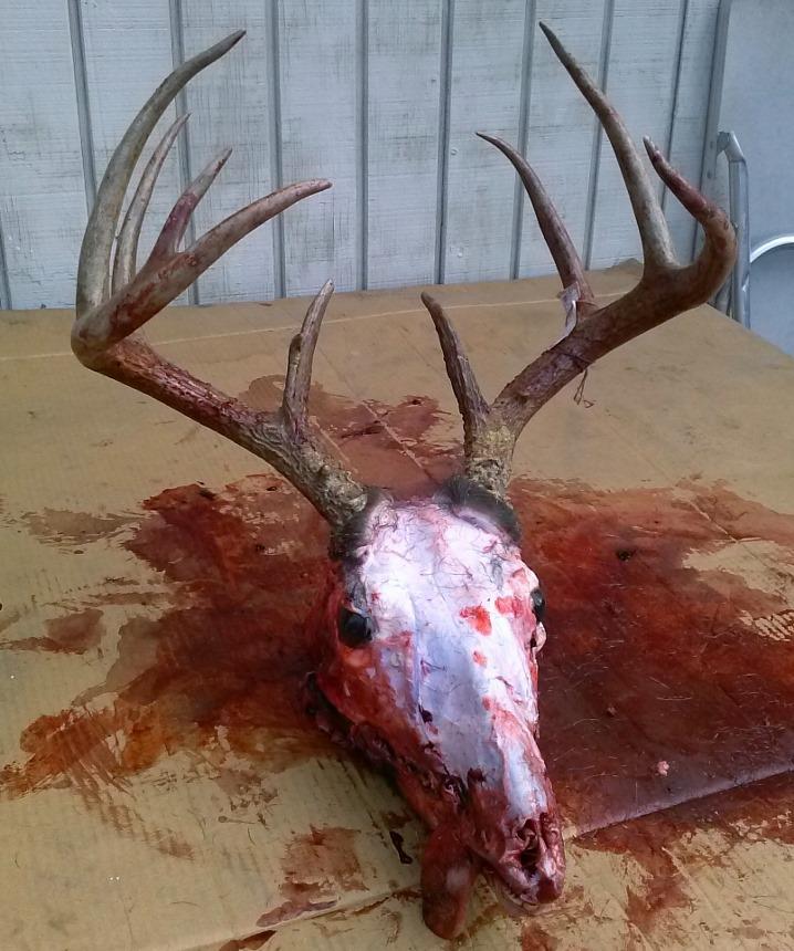 Buck down Cam00910