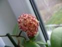 Blüten 2014 P1140411