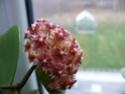 Blüten 2014 P1140412