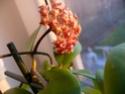 Blüten 2014 P1140413