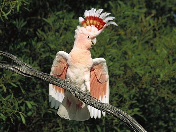 Oiseaux Be528910