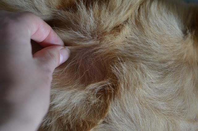 Perte de poil et irritation de la peau: avis Dsc_6112
