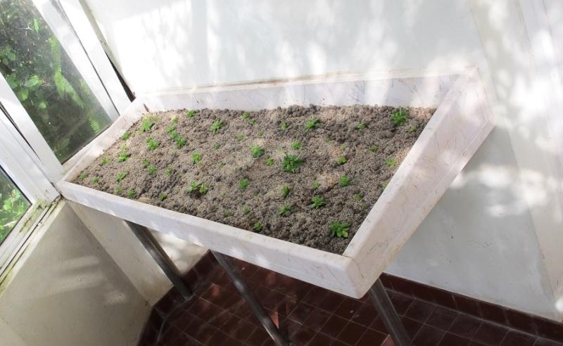 Succulentarium bis. 02610