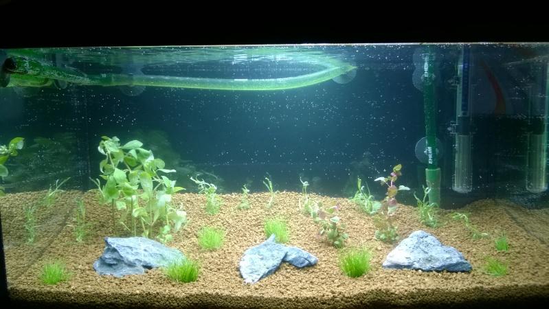 Premier projet, Aqua 54L Wp_20114