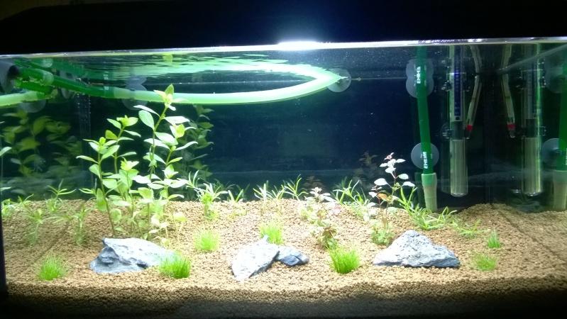 Premier projet, Aqua 54L Wp_20115
