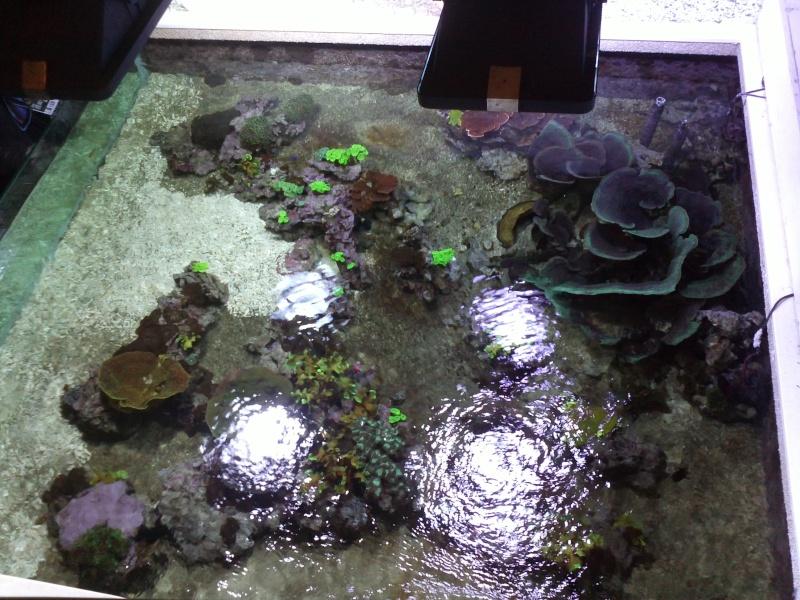 petit passage à l'aquarium de la porte dorée Img12610