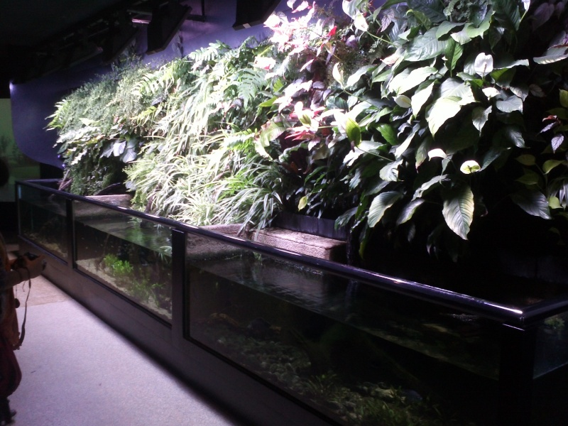 petit passage à l'aquarium de la porte dorée Img15910
