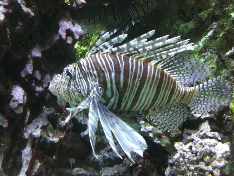 petit passage à l'aquarium de la porte dorée Img17510