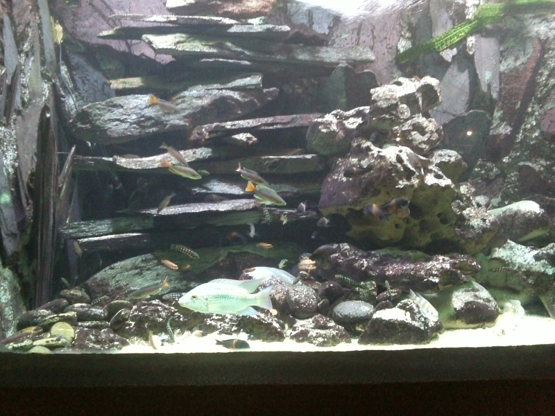 petit passage à l'aquarium de la porte dorée Img17610