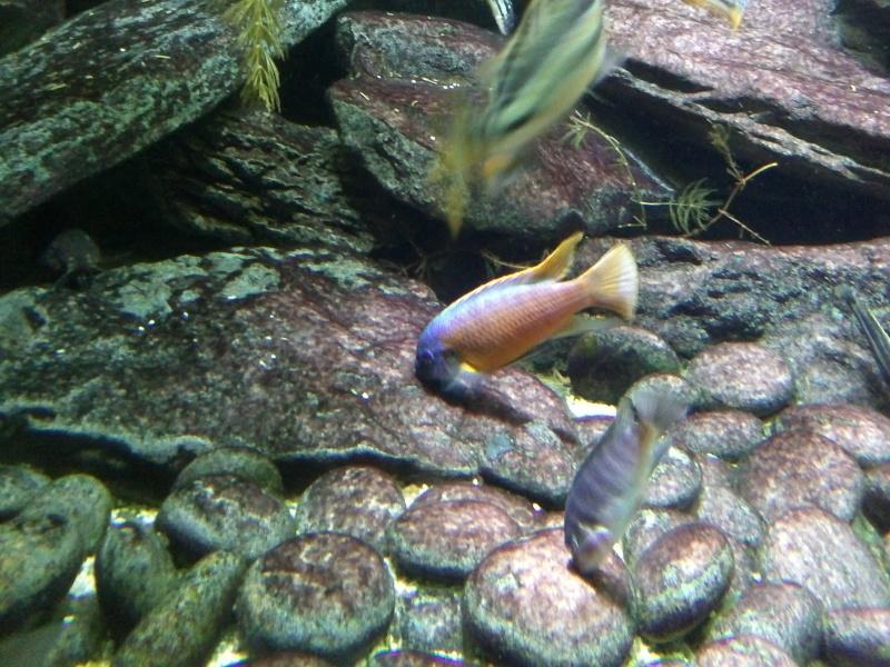 petit passage à l'aquarium de la porte dorée Img18010