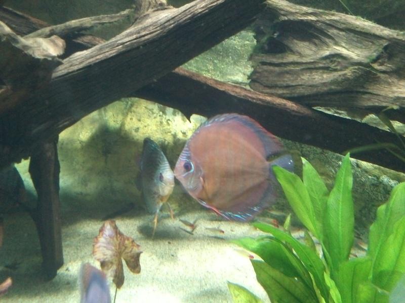 petit passage à l'aquarium de la porte dorée Img19110