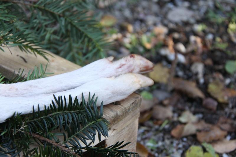 Les particularités de la nature Albino11