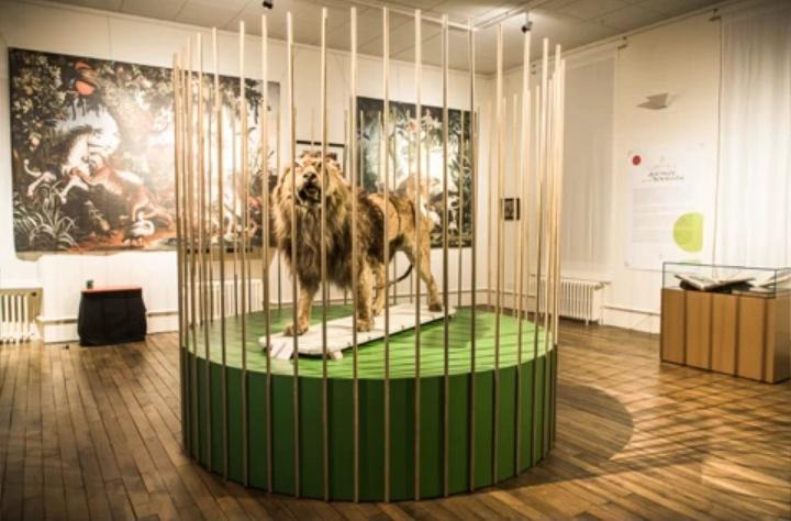 Gueret, exposition Les animaux du roi janvier-avril 2014 Guaret10
