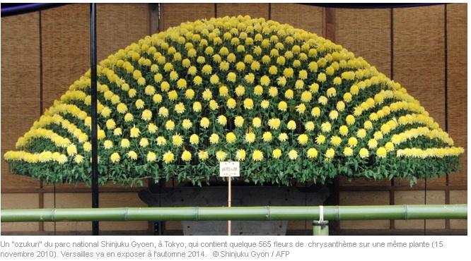 Versailles expose des chrysanthèmes japonais en 2014 Versai10