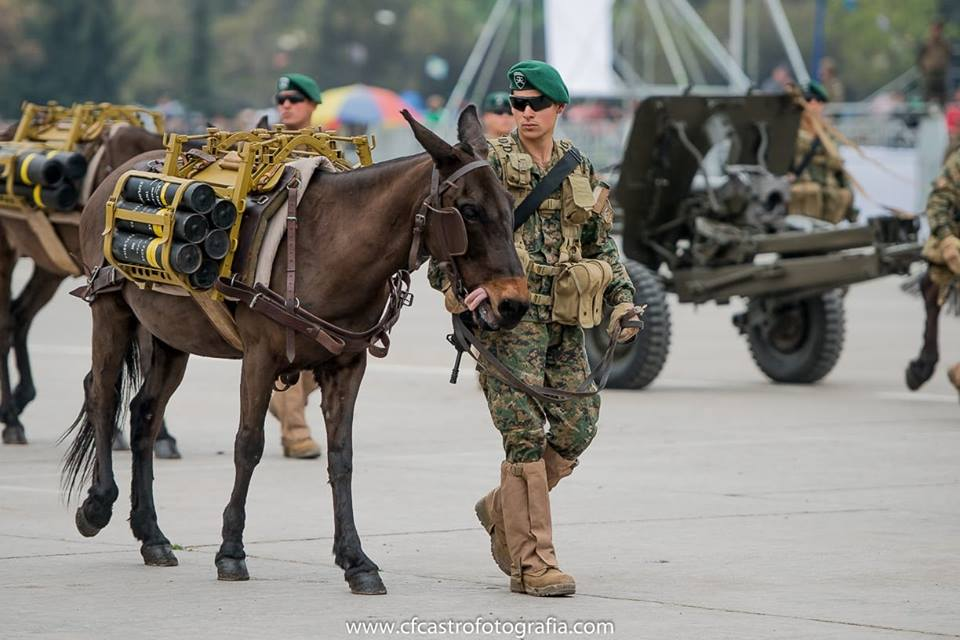 Armée Chilienne / Chile's armed forces / Fuerzas Armadas de Chile - Page 14 323