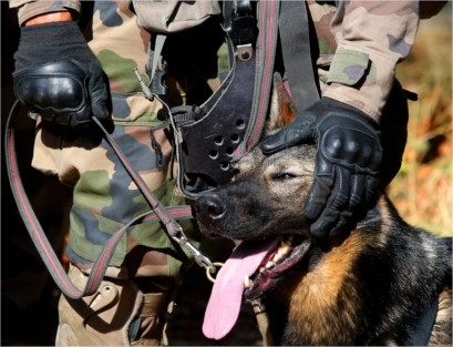 Animaux soldats - Page 7 332