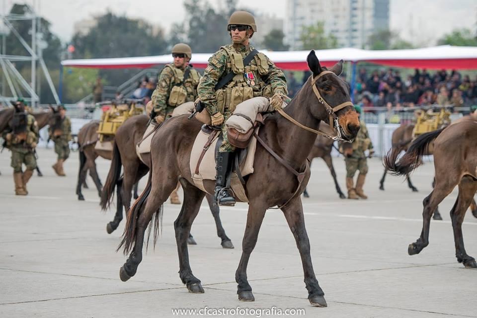 Armée Chilienne / Chile's armed forces / Fuerzas Armadas de Chile - Page 14 422