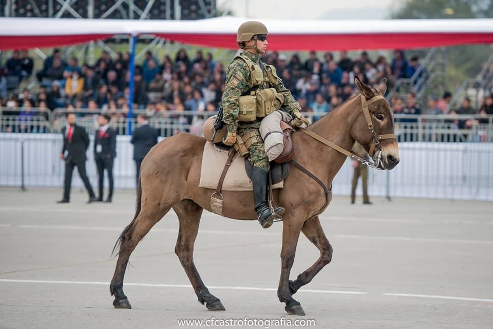 Armée Chilienne / Chile's armed forces / Fuerzas Armadas de Chile - Page 14 524