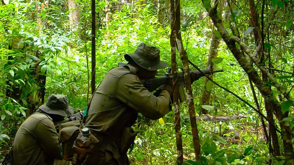 Les Forces militaires de la République des Fidji  /Republic of Fiji Military Forces (RFMF) 951