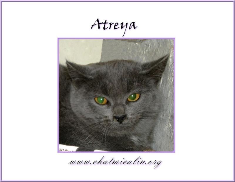 Tous nos adoptés en image Atreya11