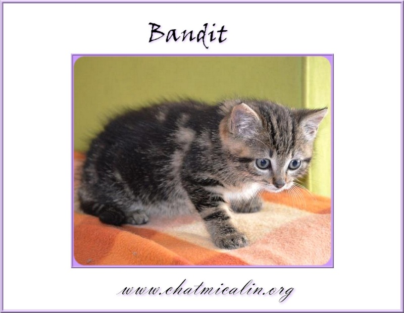 Tous nos adoptés en image Bandit12