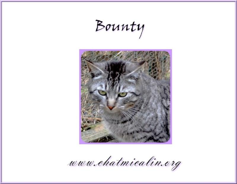 Tous nos adoptés en image Bounty10