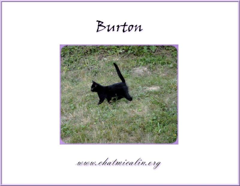 Tous nos adoptés en image Burton10