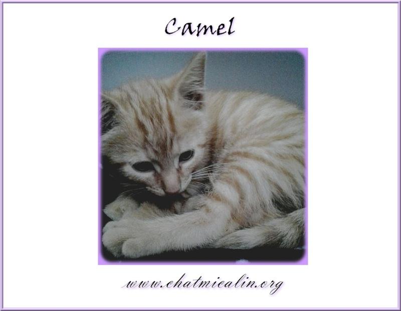 Tous nos adoptés en image Camel_10