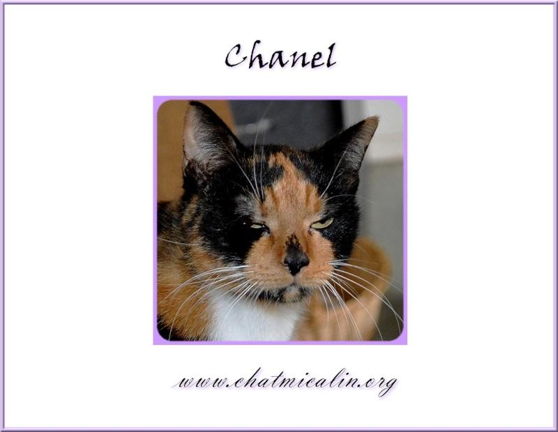 Tous nos adoptés en image Chanel11