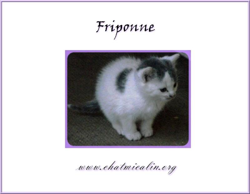 Tous nos adoptés en image Fripon10