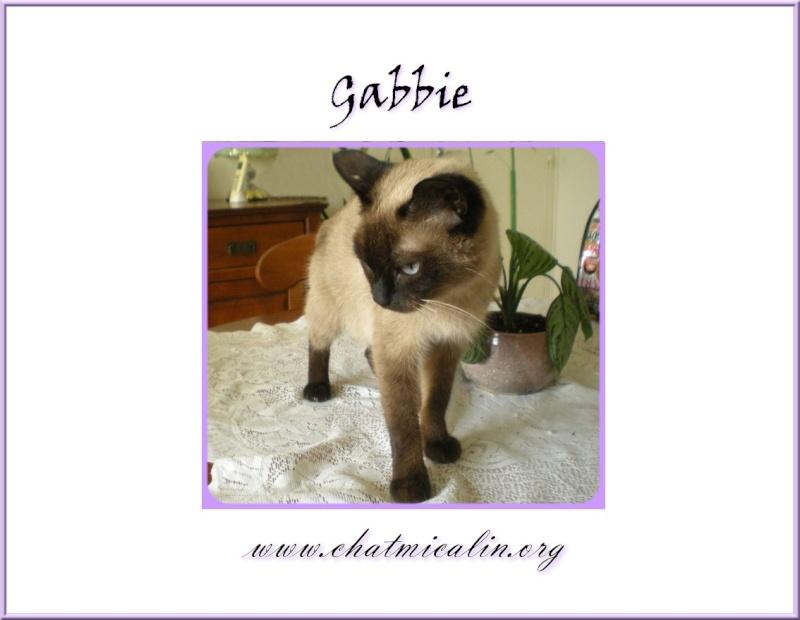 Tous nos adoptés en image Gabbie10